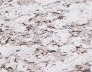 Yili White Granite
